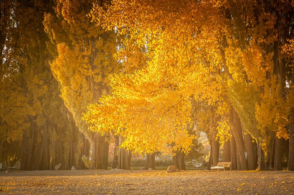 After-Autumn Splendour